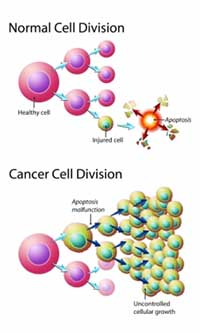 Cancer Cell Growth Using Game Theory in AnyLogic PLE